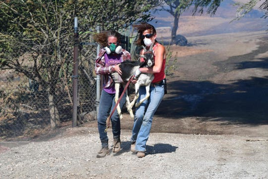 Robyn Phipps and Laura Horvitz help rescue goats from a ranch near the Reagan Presidential Library in Simi Valley during the Easy Fire in Simi Valley, Calif. on Oct.  30, 2019.