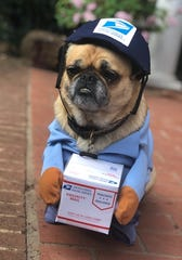 Doodle the rescue Pug mix takes pride in barking at the mailman every day, so her parents thought this costume was absolute perfection. Bonus: The mailman is a big fan of the outfit.