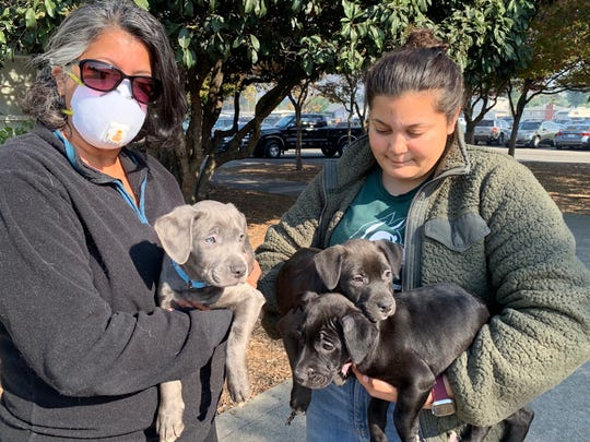 Priti Kurtz and her teen daughter, Keira, took the three puppies they are fostering and left their home, which has no power and is near the Kincade Fire evacuation zone. They took the puppies to a Red Cross shelter to cheer up evacuees.