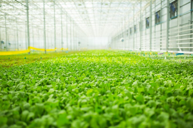 BrightFarms, a New York-based packaged salads company soon expanding to Etowah, produces a number of products including spring mix, spinach, baby kale, romaine and arugula.
