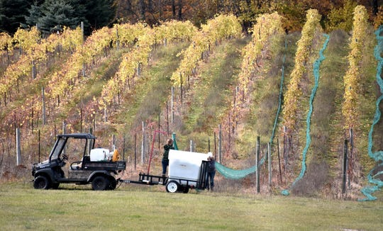 Protective netting is removed from grape vines Wednesday, Oct. 30, at the Mackinaw Trail Winery south of Petoskey. The netting protects the vines and grapes from birds and deer who love to graze on the plants.