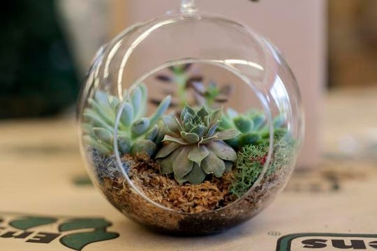 This glass container makes a nice home for succulents.