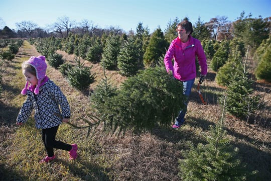 Debbie Kraehnke and her granddaughter, Kenzie Stark age 4, both of Fort Atkinson, cut a spruce tree for Christmas from Riehle's Tree Farm.