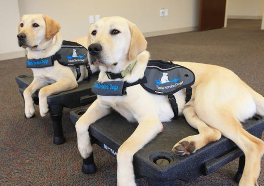 Takoda Service Dogs, from left, Glory and Raider on October 30, 2019.