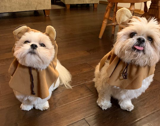 We're not sure if these are Ewoks or Shih Tzu? Regardless, Cooper and Lucy deserve tons of Halloween candy (dog treats?) for these costumes.