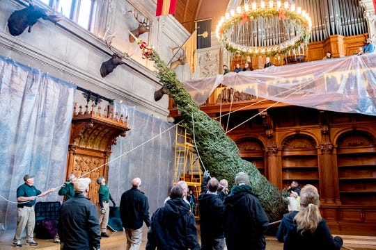 A crew swings a 35-foot Fraser fir tree around the chandelier in the banquet hall of the Biltmore House during the annual Biltmore tree-raising at the estate on Nov. 1, 2019. A crew of more than 40 people pull the tree by hand and secure it in place in the house. In December the tree will be replaced with a fresh one after hours.