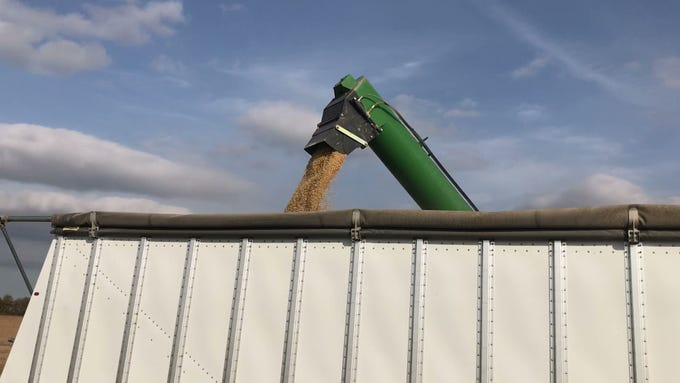 Soybeans harvested from an Elmore field are deposited into a 40-foot trailer Oct. 24. From there, Genoa farmer Chad Gargas drove the trailer filled with about 1,000 bushels of soybeans to a Toledo grain elevator.