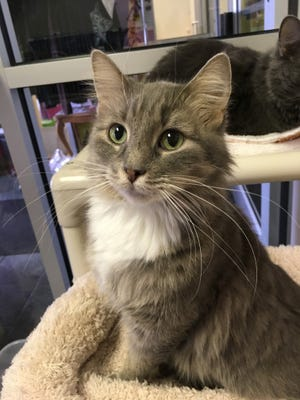 Trigger is waiting for her forever home at the Oshkosh Area Humane Society.