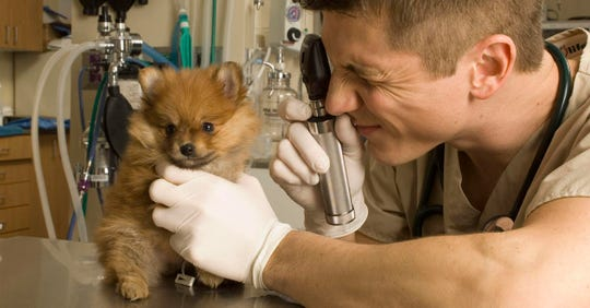 The Best Veterinarian is Carter Animal Hospital.
