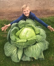 Who knew cabbages could grow this big? Here's Ryder Raney with his winning entry, chosen for size and appearance.