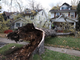 A large tree fell onto 297 Laurelton Rd., near Culver, from high winds that hit the Rochester region overnight. 
