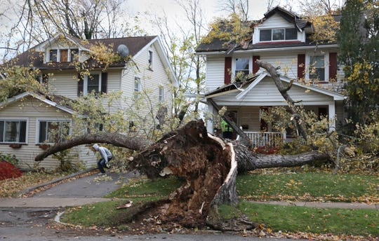 An uprooted tree in Irondequoit after a Nov. 1, 2019 windstorm