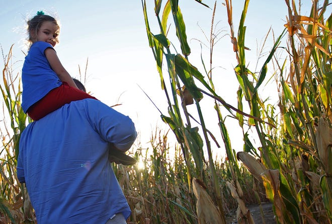 Jonathan and Evelyn Alvis make their way through the Circle S Corn Maze near Wall on Wednesday, Oct. 23, 2019.