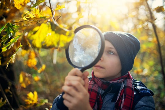 A young explorer observing beautiful autumn leaves in autumn forest.