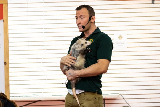 Delivis Niedzialek, one of the directors of Little Ray's Nature Center, carries Daisy as he teaches about opposums during an educational program Saturday, Nov. 2, 2019, at the Court of Flags Shopping Mall in Port Huron.