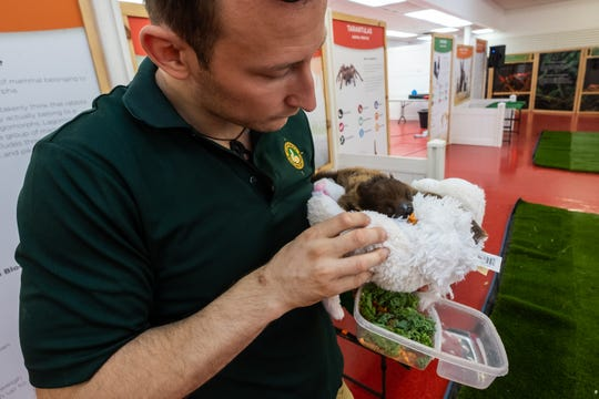 Delivis Niedzialek, one of the directors of Little Ray's Nature Center, feeds a young sloth before hosting an educational program Saturday, Nov. 2, 2019, in the Court of Flags Shopping Mall in Port Huron. The sloth came from a breeder who breeds them for conservation programs.