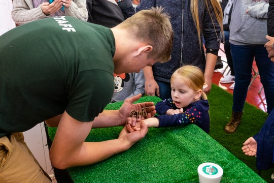 Audrey Short, 4, watches as Q'ielon Bell, a staff member from Little Ray's Nature Center, lets a tarantula walk across her hand during an educational program Saturday, Nov. 2, 2019, at the Court of Flags Shopping Mall in Port Huron.