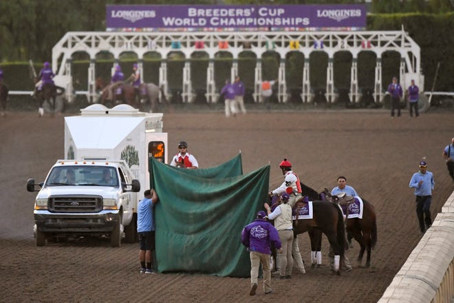 "Track workers treat Mongolian Groom after the Breeders' Cup Classic horse race at Santa Anita Park, Saturday, Nov. 2, 2019, in Arcadia, Calif. The jockey eased him up near the eighth pole in the stretch. The on-call vet says he has ""serious"" injury to leg. Was taken to equine hospital on the grounds and eventually euthanized."