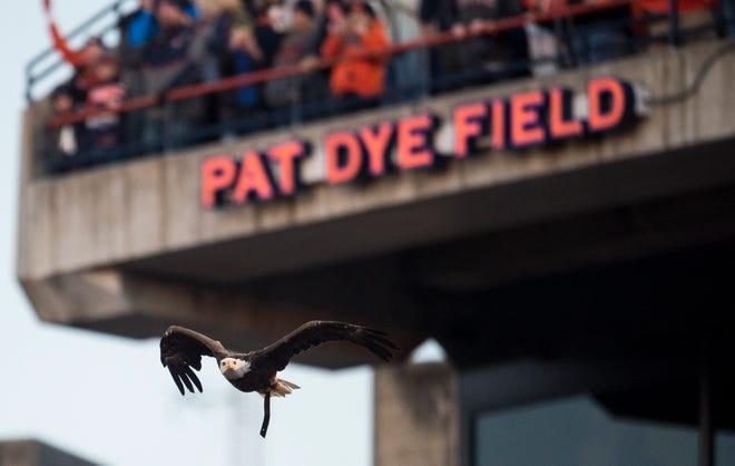 Auburn's War Eagle flies around Jordan-Hare Stadium in Auburn, Ala., on Saturday, Nov. 2, 2019. Auburn defeated Ole Miss 20-14.