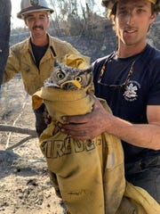 A great horned owl, wrapped in Ventura County firefighter Caleb Amico's jacket, was rescued by the hand crew working on the Maria Fire outside Santa Paula on Nov. 2, 2019.
