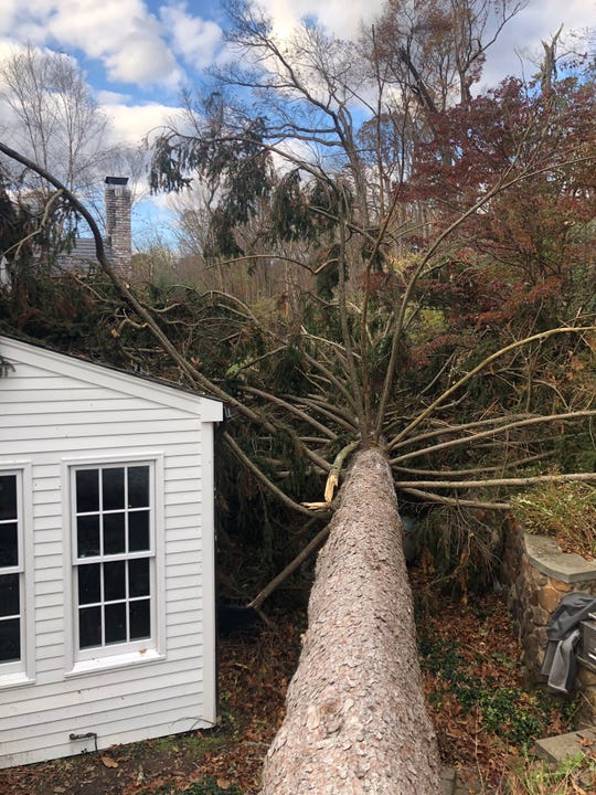 This large tree fell next to a home in Harding during a storm that produced a verified EF-1 tornado in Harding. Nov. 2, 2019.