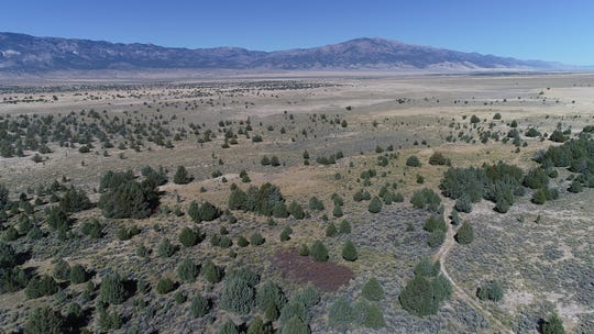 A stand of trees in northeastern Nevada known as the swamp cedars is considered sacred by a number of Shoshone tribes.