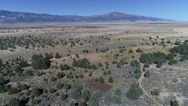 A stand of trees in northeastern Nevada known as the swamp cedars is considered sacred by a number of Shoshone tribes. The trees have been a ceremonial site since time immemorial. They also represent a living connection to native people killed in a series of massacres in the region.