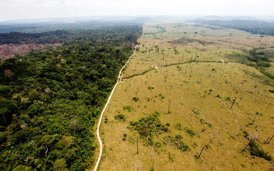 Getting ready for the cows with Amazon deforestation.