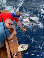 A sailfish is caught and released Monday in 90 feet of water by a happy customer aboard Stuart Big Game Fishing with Capt. V.J. Bell.