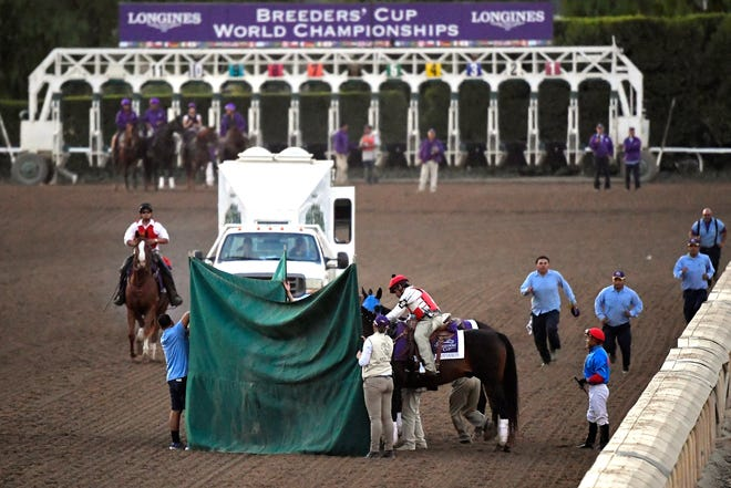A screen is put up as track workers treat Mongolian Groom after the Breeders' Cup Classic. The 4-year-old gelding suffered a broken leg in the final stretch.