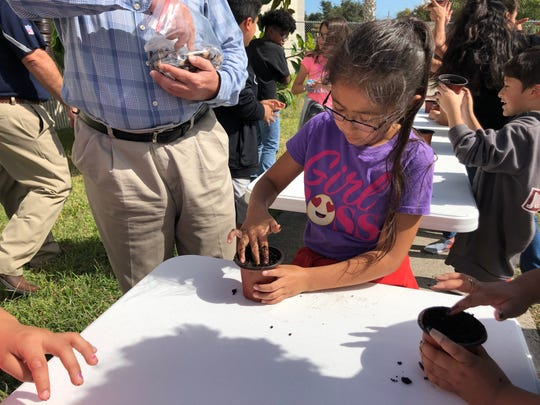 Fourth-grader Mia Renee Pena plants an acorn into a pot at Dr. M.L. Garza-Gonzalez Charter School on Tuesday, Nov. 5, 2019. The school is participating in Reforest Texas, a program that promotes reforesting as a solution to climate change.