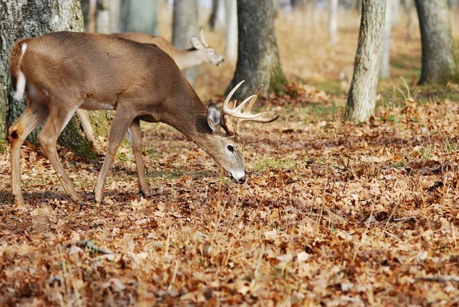 The Pennsylvania Department of Conservation and Natural Resources will offer a two-day hunt for both antlered and antlerless deer on Dec. 9-10 at Presque Isle State Park.