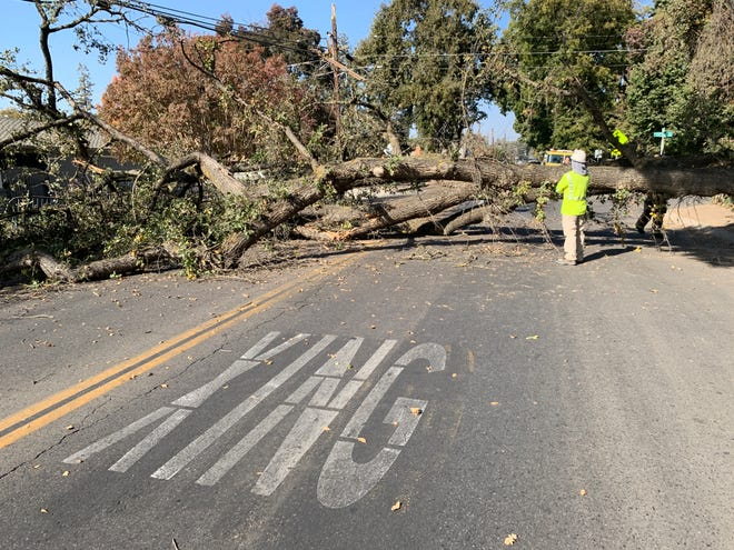 More than 200 residents are without power after a fallen oak tree pulled down power lines along Giddings Street at Raymon Avenue in Visalia.