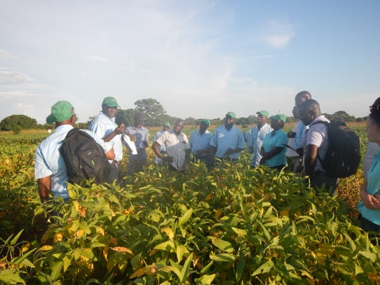Harun Murithi, second from left,  training Soybean Innovation Lab trial operators on how to identify and assess soybean diseases like red leaf blotch. This training took place at a Pan-African Soybean Variety Trial site in Nyankpala, Ghana, in October 2019.