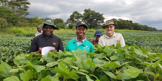 Glen Hartman, right, pictured with Pan-African Soybean Variety Trial collaborators with the International Institute of Tropical Agriculture (IITA) at a field site in Zambia in March 2019.
