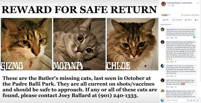 A screenshot shows a poster made for James and Michelle Butler's three missing cats. Gizmo, Moana and Chole were with the couple before they were killed. They were last seen near Padre Balli Park in October.