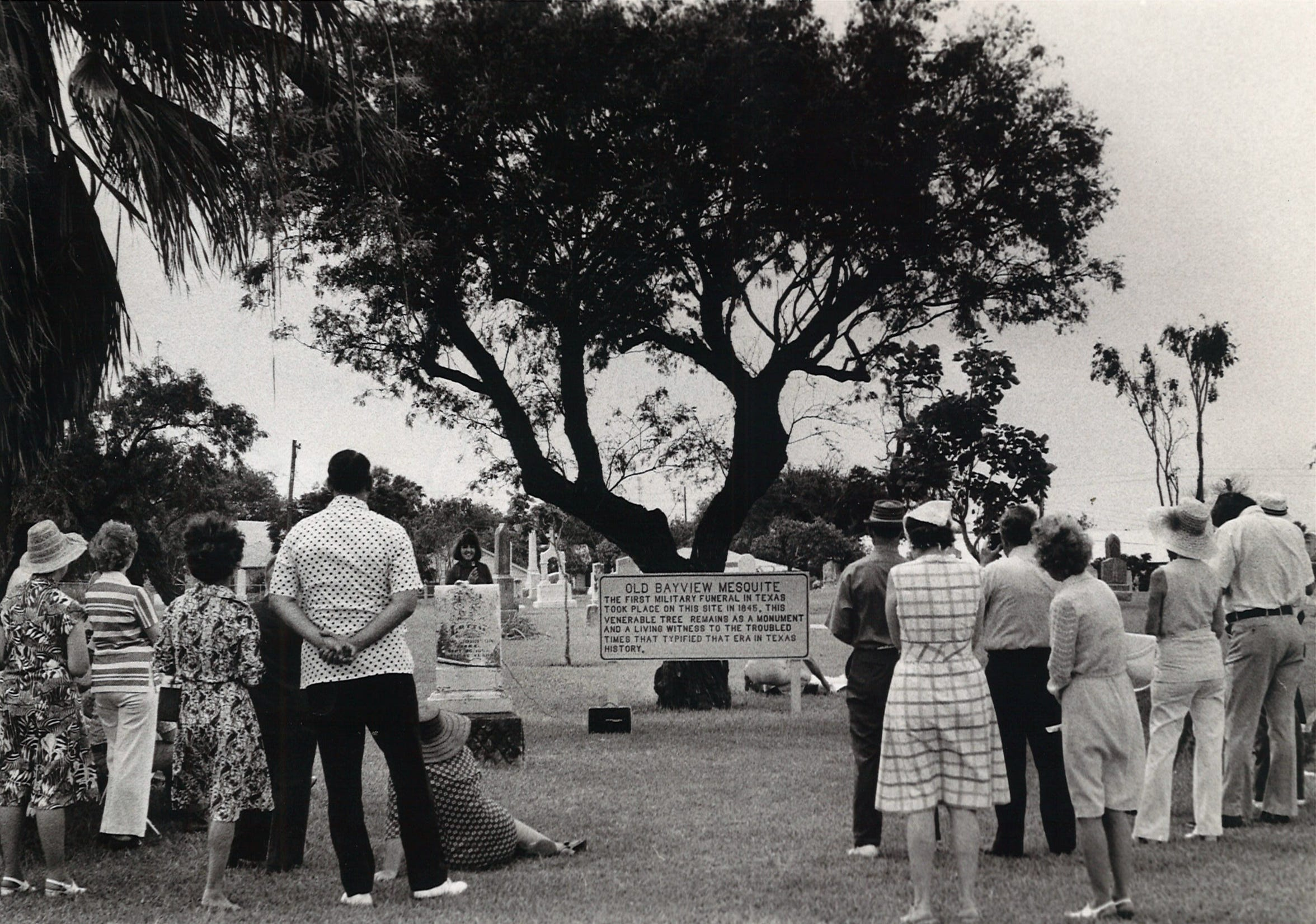 Members of the Bicentennial Commission, Parks and Recreation Board and Beautify Corpus Christi Association dedicate temporary marker about the Old Bayview Mesquite on July 4, 1976. The tree was over 200 years old when it died in 1986.