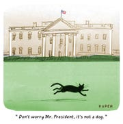 Black cat at White House.