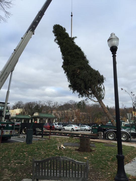 Ridgewood's Christmas tree is installed downtown.