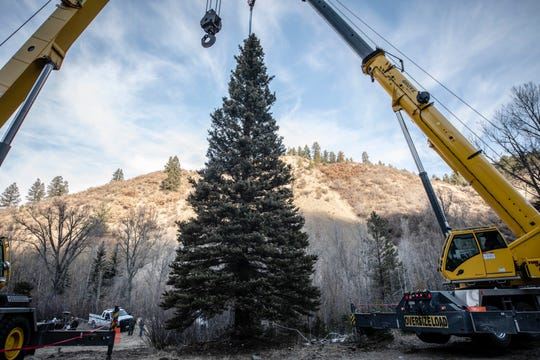 The 2019 U.S. Capitol Christmas Tree tree cutting ceremony took place Wednesday, Nov. 6, 2019, just on the east side of Red River, New Mexico. This year's Capitol Christmas tree is a 60-foot tall, 68-year-old blue spruce, which was selected from the Questa Ranger District of the Carson National Forest.