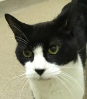 Kip is among the senior animals at the Oshkosh Area Humane Society waiting for adoption.