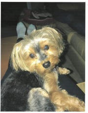 Leo, a 5-pound Yorkshire terrier, died after being kicked in the head by his owner's then-boyfriend, Earl Allen, according to Southern Regional Police.