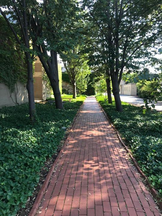 Scenes of unexpected beauty on walks around Pam's new East Avenue neighborhood.