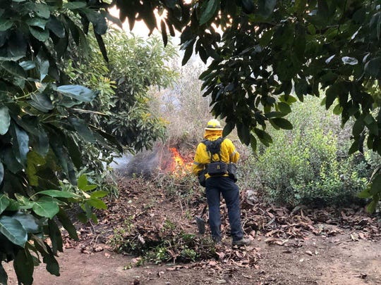 A firefighter works in a agricultural area to prevent the Maria fire from growing in this contributed photo.