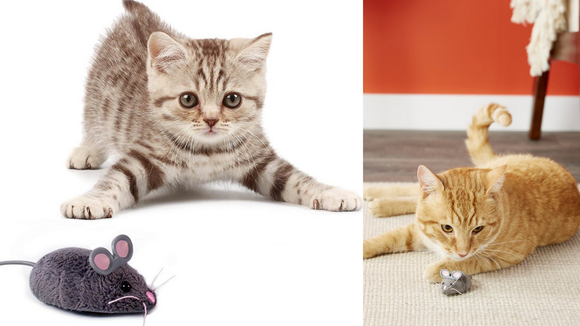 Best cat gifts: Hexbug Mouse Robotic Cat Toy