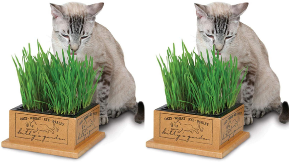 Best cat gifts 2019: SmartCat Kitty's Garden