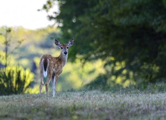 A four-day White-tailed deer hunt is scheduled for 15 state parks in Indiana.