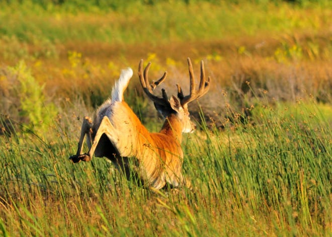 A White-tailed deer hunt is scheduled at 15 state parks to prevent over-browsing.