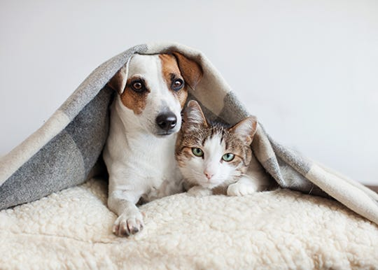 Funding for the center, which'll serve as both an animal shelter and adoption center, was approved during a special mail-in-ballot election in July and August 2018.