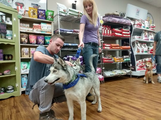 On Christmas 3 years ago, a husky went missing. He's finally reunited with his owner